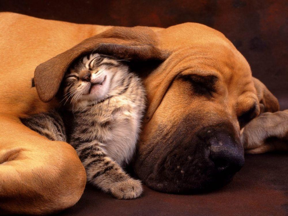 Cat-and-dog_sleeping