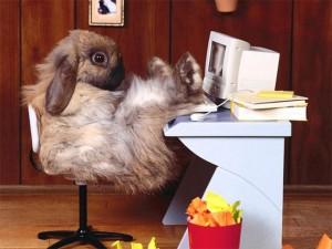 thesis bunny