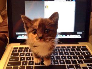 aww-kitten-on-a-computer